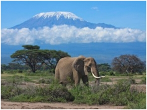 ElephantKilimanjaro